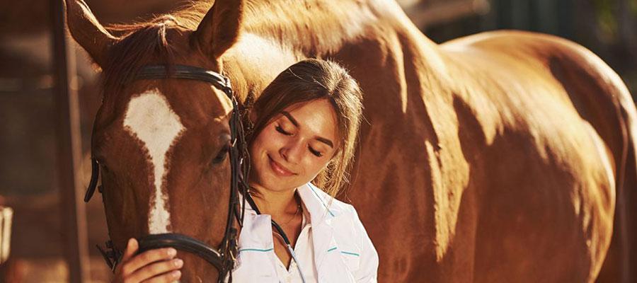 L'équi-coaching ou l'horse coaching